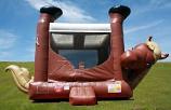 JUM - Standard - Pony Belly Bounce